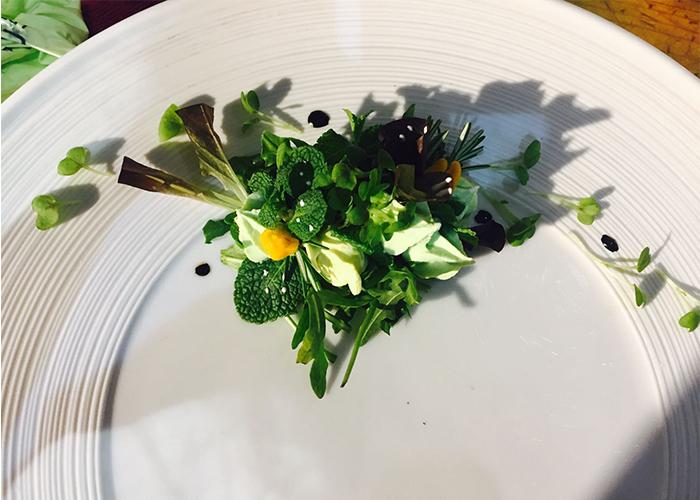 nautilus garden piatto